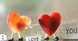 كيف يبدأ الحب