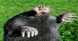 أغرب الحيوانات على وجه الأرض