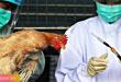 الأوبئة و الانفلونزا تنتشر في الصين