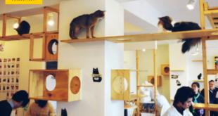 تناول قهوتك في المقهى برفقة القطط