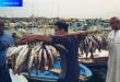 الصيد في السعودية