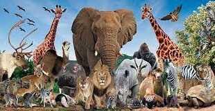 معلومات غريبة عن مجموعة من الحيوانات الخطيرة والأليفة