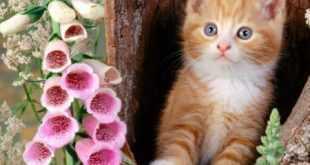 تربية القطط عالم رائع جدا معلومات عن تربيتها