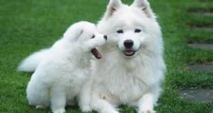فوائد تربية الكلاب في البيوت