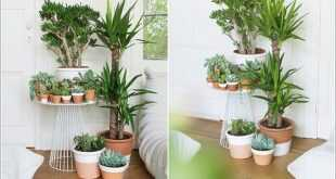 أفضل 10 نباتات لزينة المنزل والتعرف على أجواء عيش كل نبته