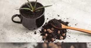 احتسي كوب قهوتك مع نباتات منزلك الجميله