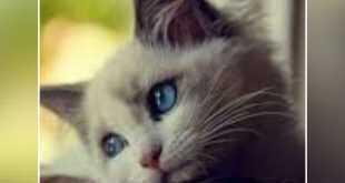 لغة الجسد عند القطط