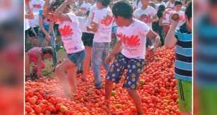 حرب الطماطم الباردة