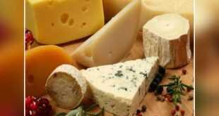 من يحصل على الجبنة اولا يفوز بها (مهرجان الجبنه)