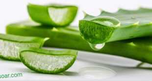 جل الألوفيرا و فوائده للبشرة