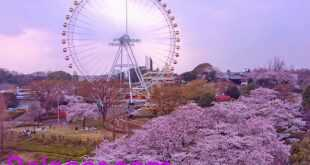 (يوميوريلاند ) اليابانية تؤجر ألعابها كمكاتب للعمل